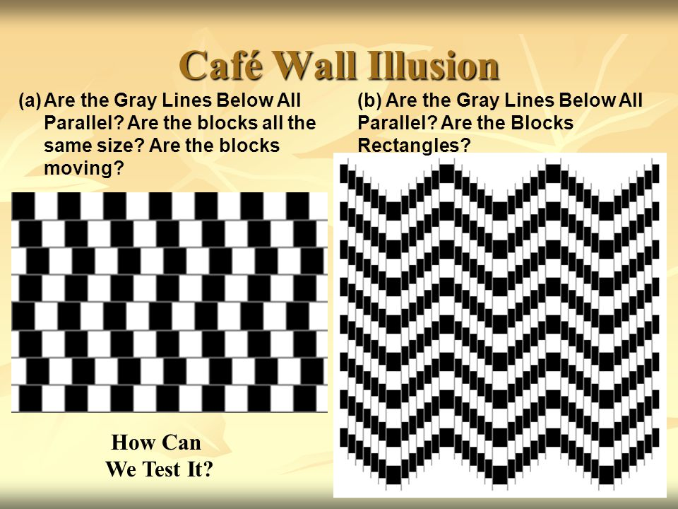 Café Wall Illusion How Can We Test It