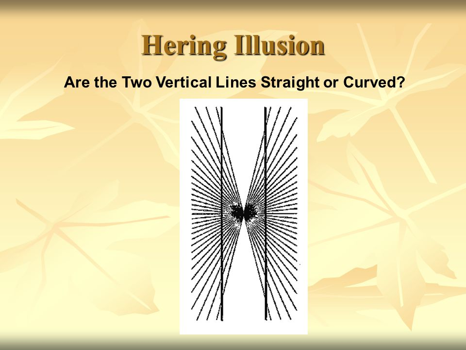 Are the Two Vertical Lines Straight or Curved