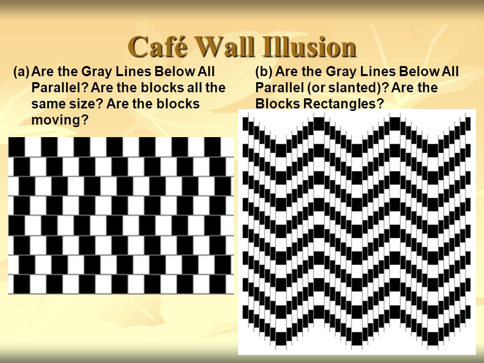 Café Wall Illusion Are the Gray Lines Below All Parallel Are the blocks all the. same size Are the blocks moving