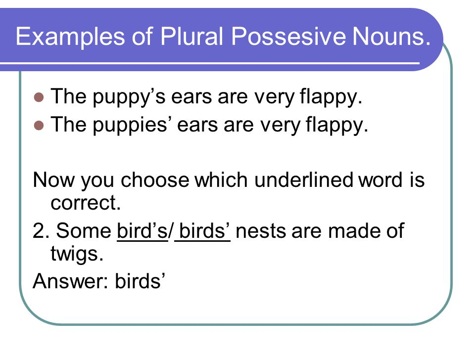 Examples of Plural Possesive Nouns.