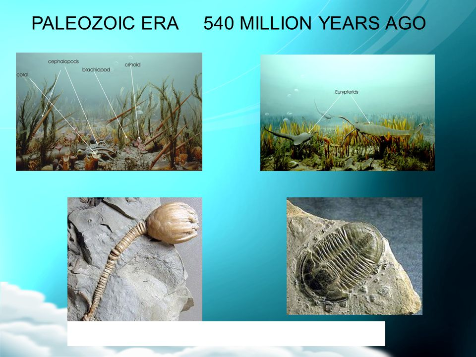 PALEOZOIC ERA 540 MILLION YEARS AGO