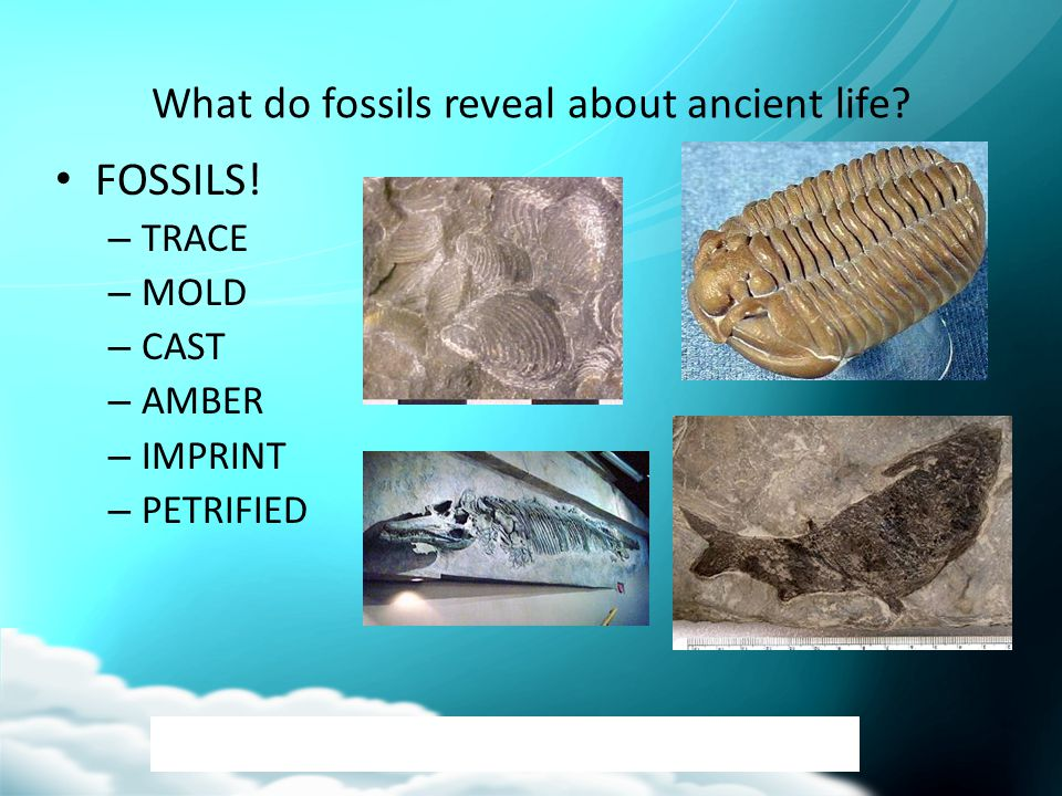 What do fossils reveal about ancient life