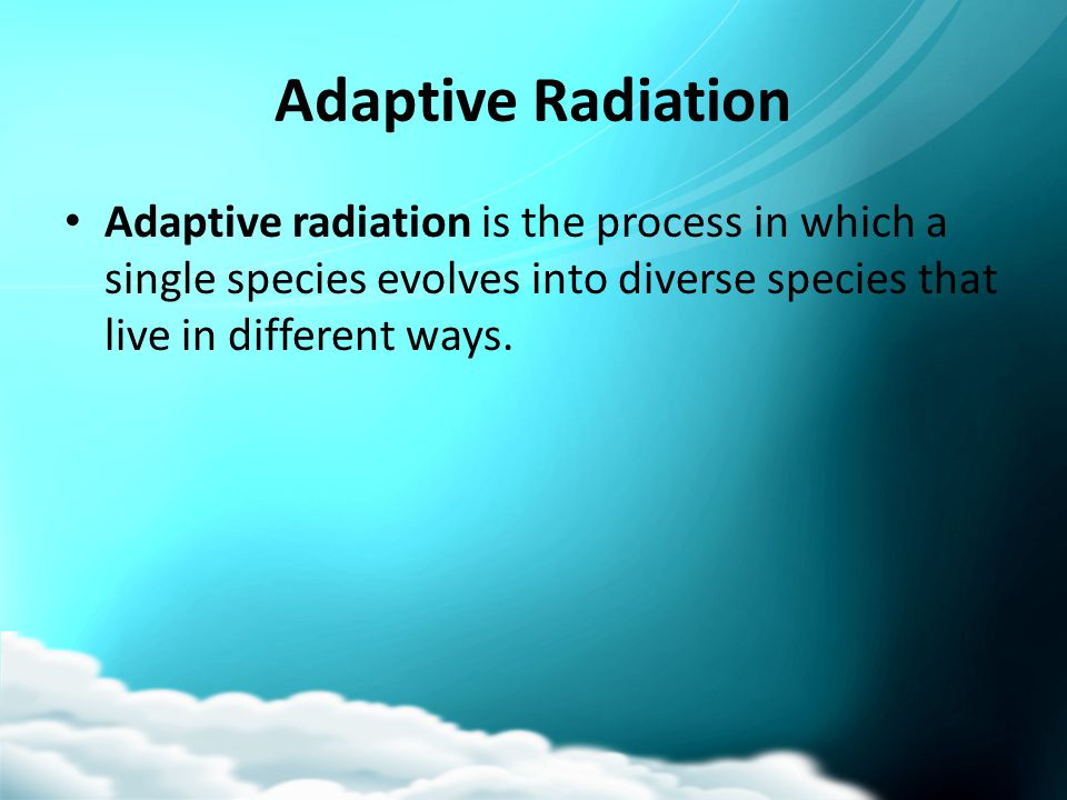 Adaptive Radiation Adaptive radiation is the process in which a single species evolves into diverse species that live in different ways.