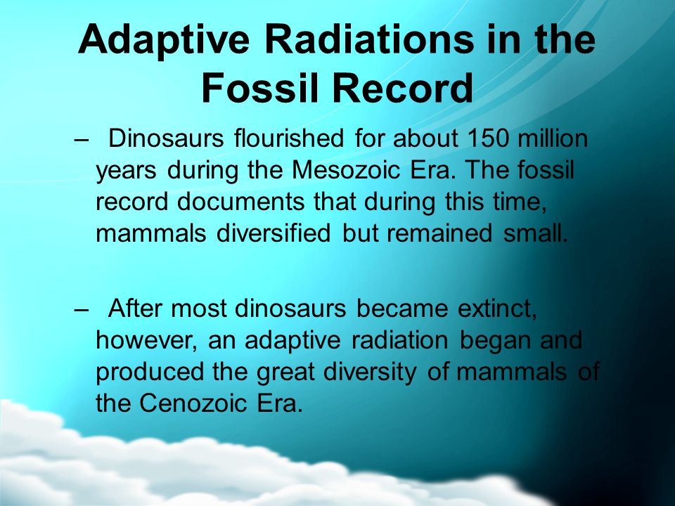 Adaptive Radiations in the Fossil Record