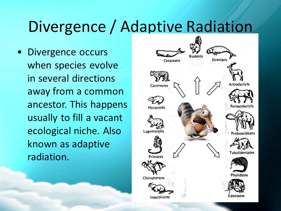 Divergence / Adaptive Radiation