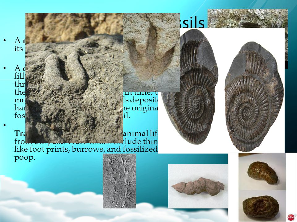 Types of Fossils A mold is an imprint of an organism or its trace.