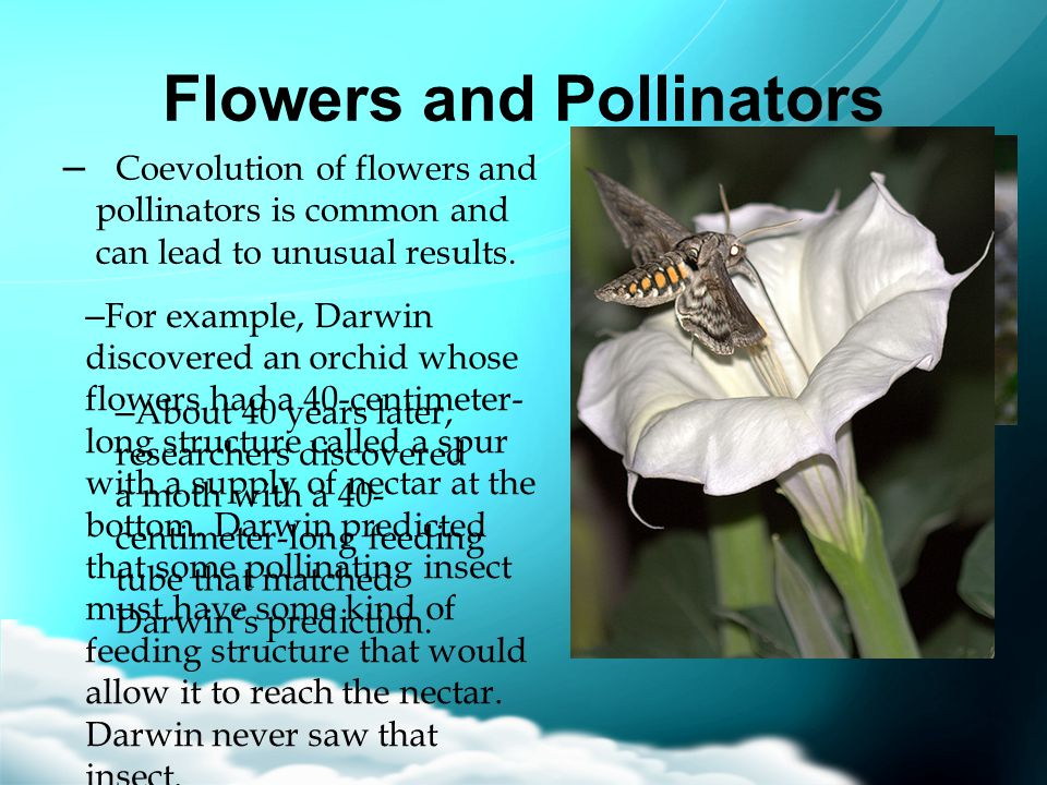Flowers and Pollinators