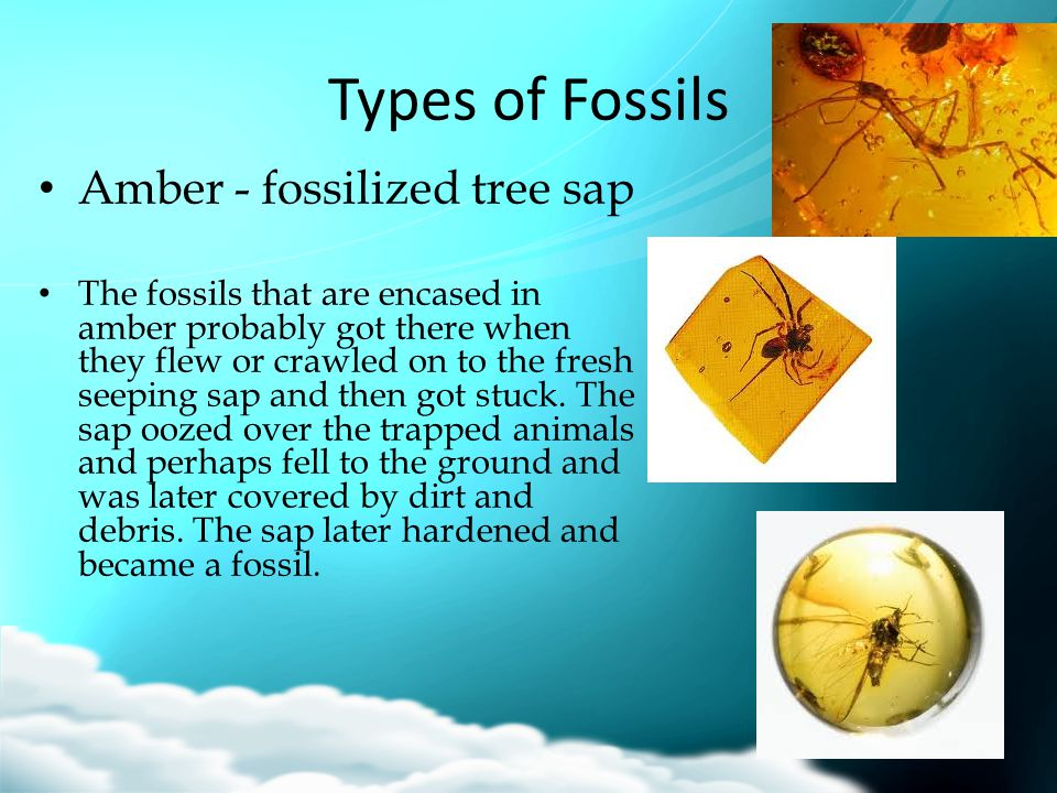 Types of Fossils Amber - fossilized tree sap
