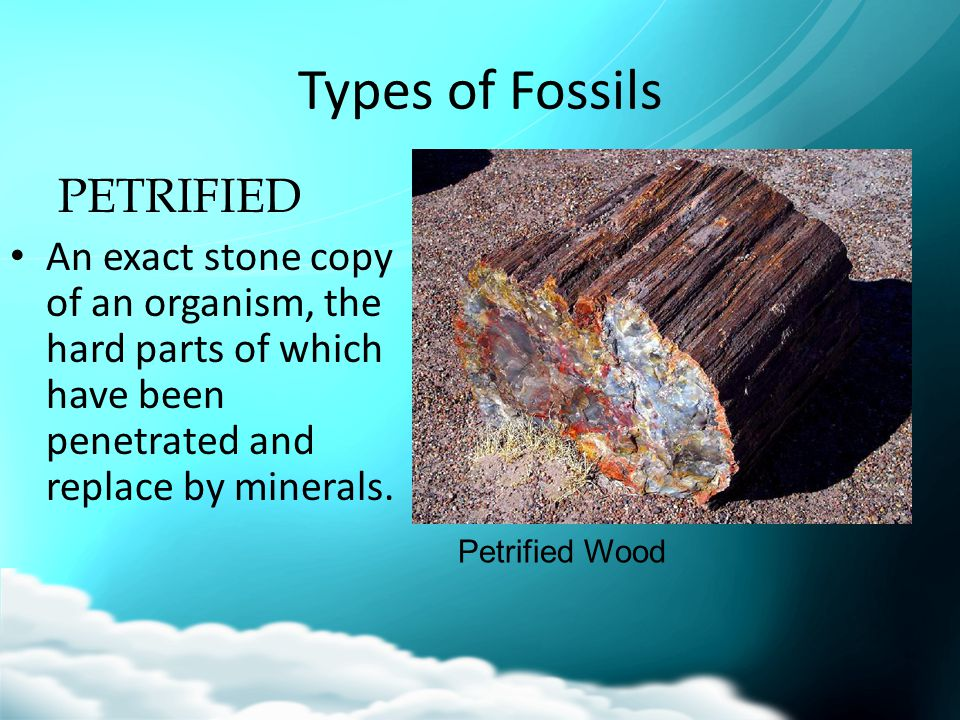 Types of Fossils PETRIFIED