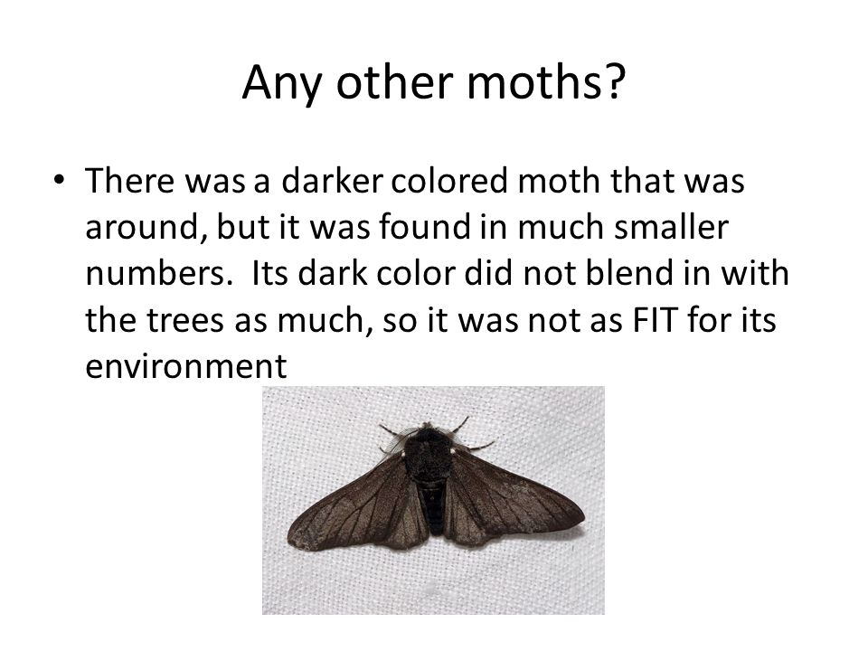 Any other moths