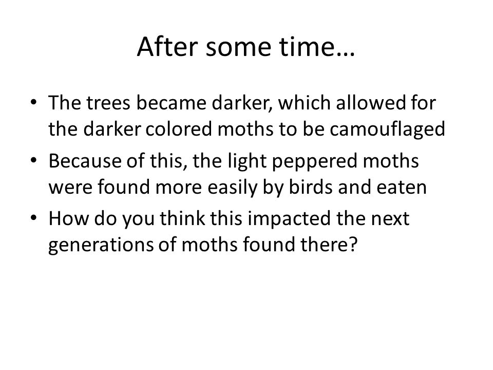 After some time… The trees became darker, which allowed for the darker colored moths to be camouflaged.