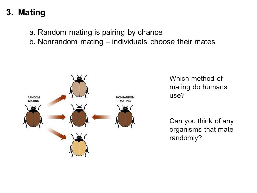 3. Mating. a. Random mating is pairing by chance. b