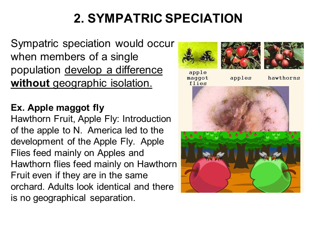2. SYMPATRIC SPECIATION Sympatric speciation would occur when members of a single population develop a difference without geographic isolation.