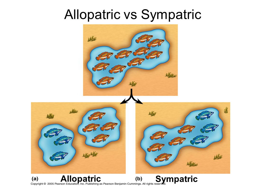 Allopatric vs Sympatric