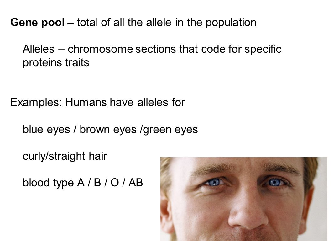 Gene pool – total of all the allele in the population