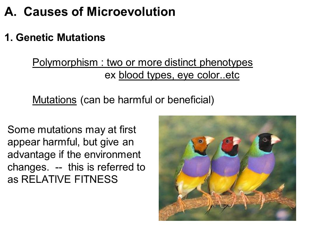 A. Causes of Microevolution