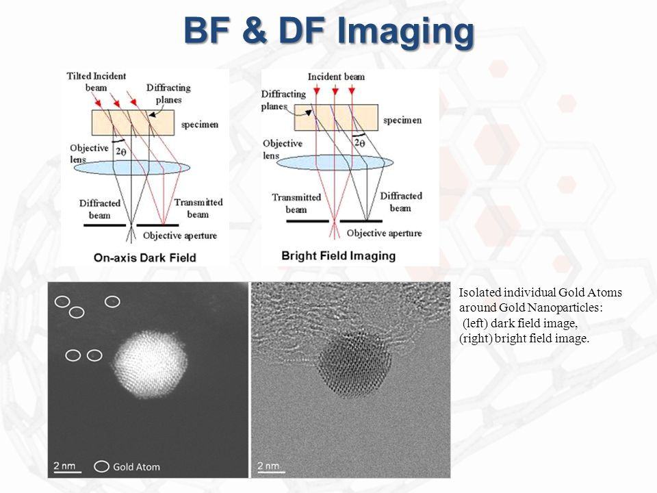 BF & DF Imaging Isolated individual Gold Atoms