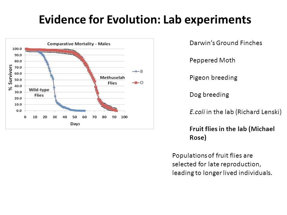 Evidence for Evolution: Lab experiments