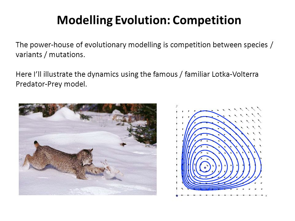 Modelling Evolution: Competition