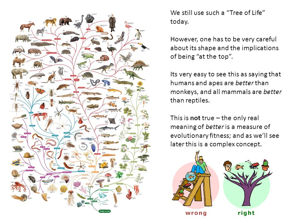 We still use such a Tree of Life today.