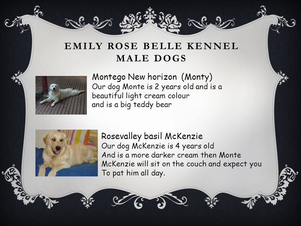 Emily rose belle kennel male dogs