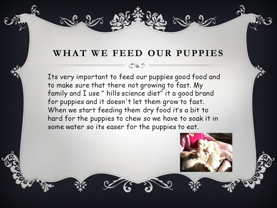 What we feed our puppies
