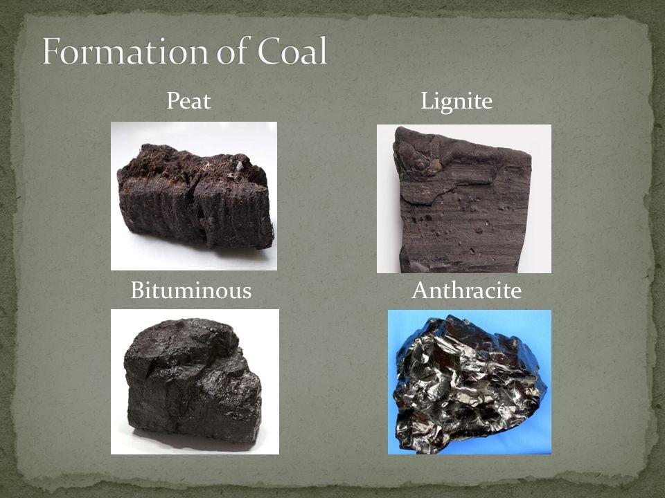 Formation of Coal Peat Lignite Bituminous Anthracite