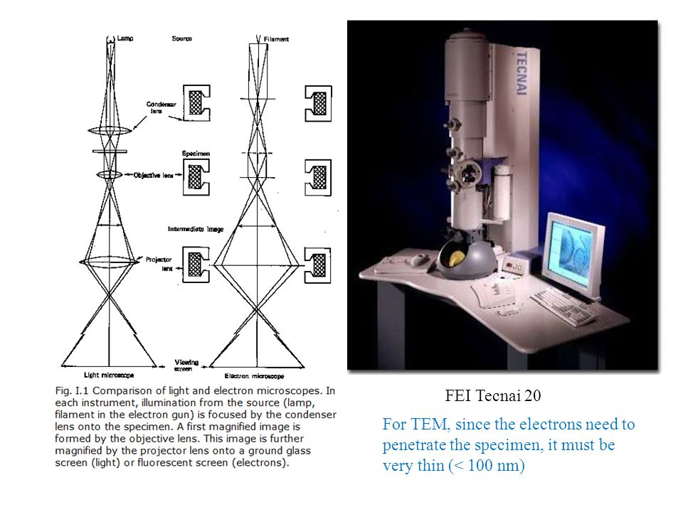FEI Tecnai 20 For TEM, since the electrons need to penetrate the specimen, it must be very thin (< 100 nm)