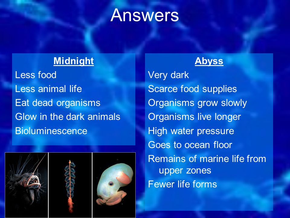 Answers Midnight Less food Less animal life Eat dead organisms