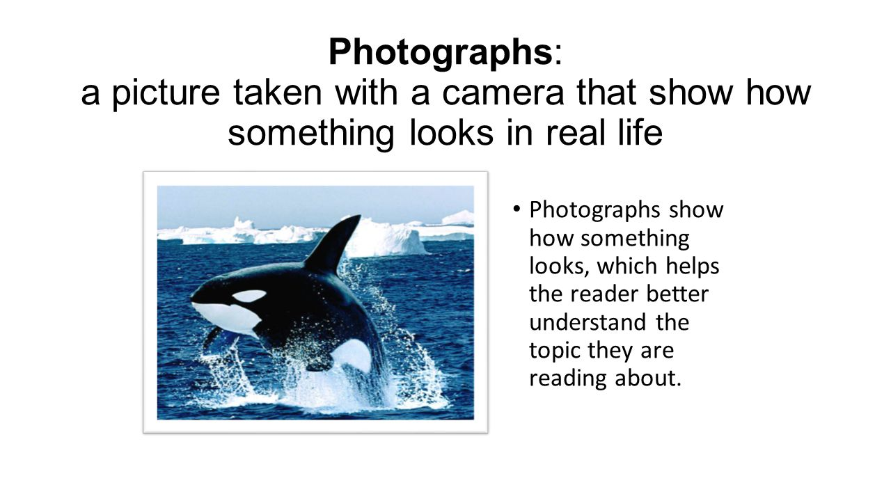 Photographs: a picture taken with a camera that show how something looks in real life