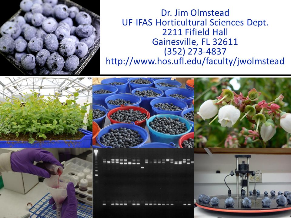 UF-IFAS Horticultural Sciences Dept.