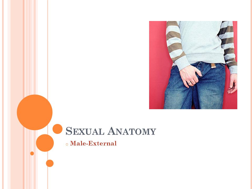 Sexual Anatomy Male-External