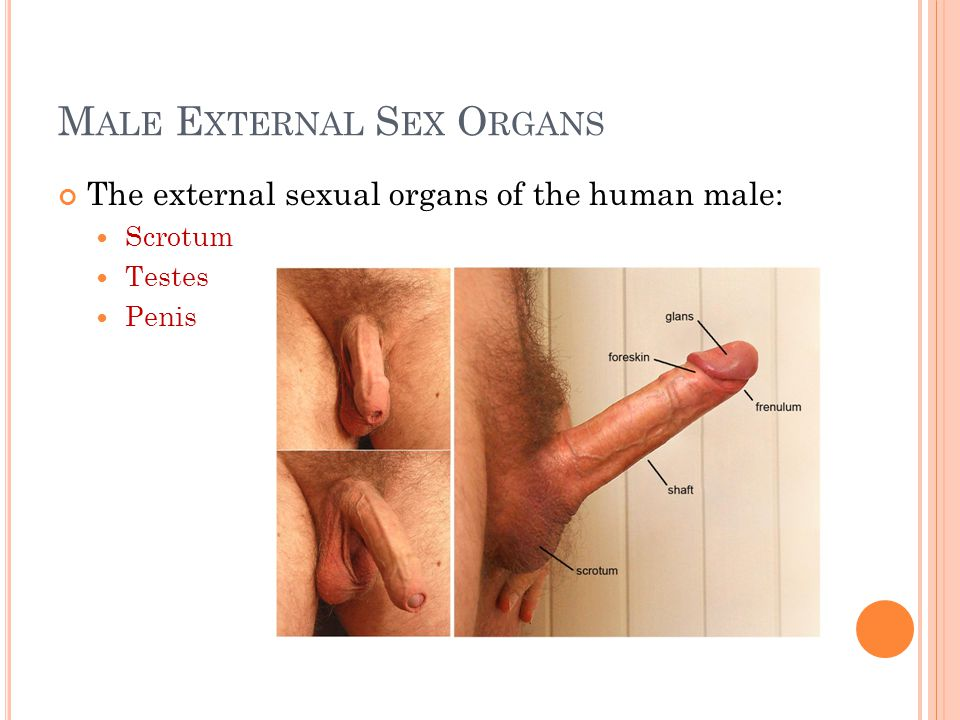 what food decreases sexual organs near