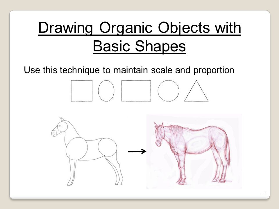 Drawing Organic Objects with Basic Shapes