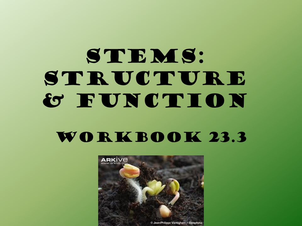 Stems: STRUCTURE & FUNCTION
