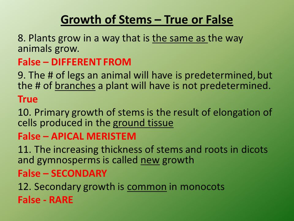 Growth of Stems – True or False