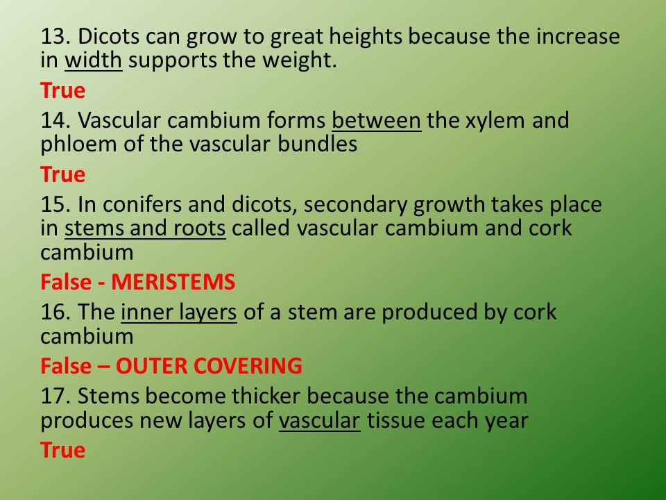 13. Dicots can grow to great heights because the increase in width supports the weight.