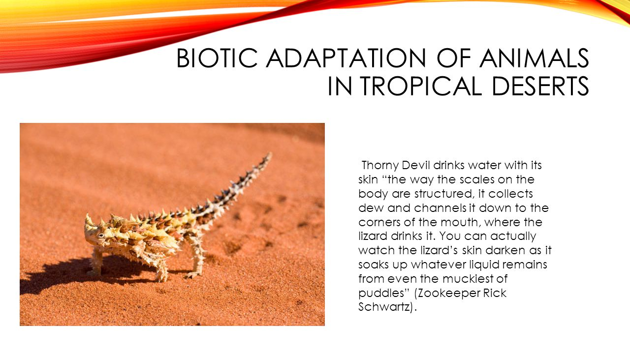 Biotic adaptation of animals in tropical deserts