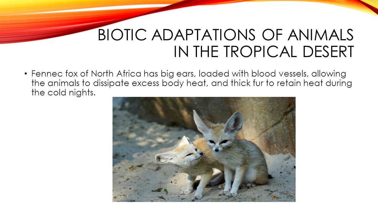 Biotic adaptations of animals in the tropical desert