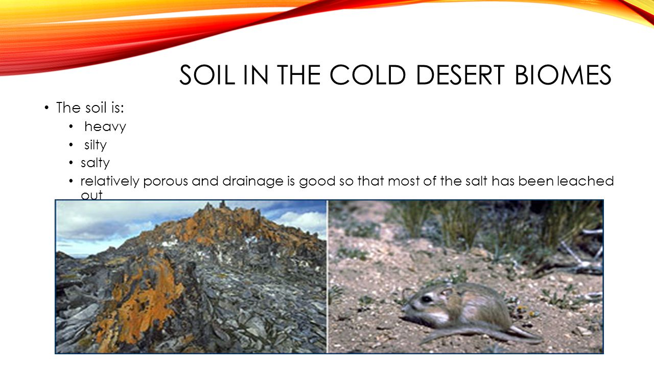 Soil in the cold desert biomes