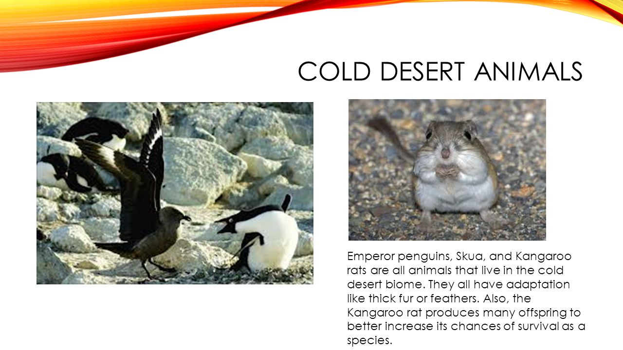 Cold desert animals
