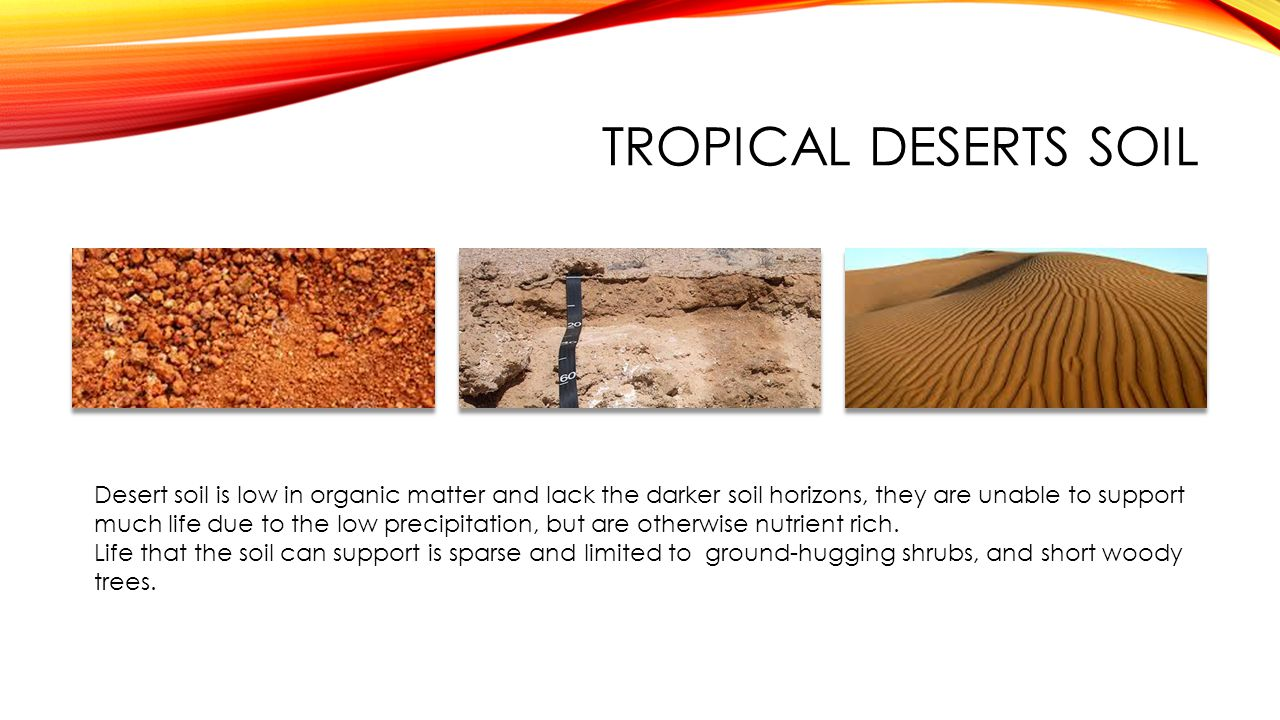Tropical deserts Soil