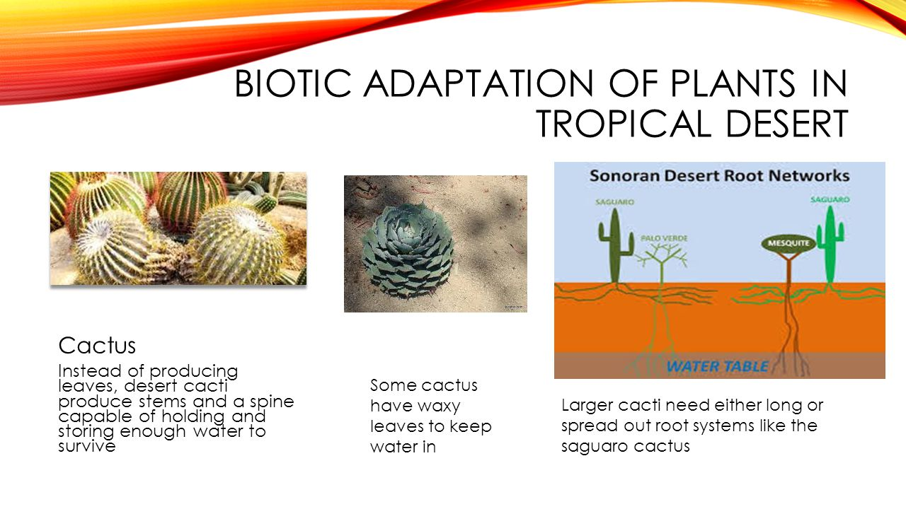 Biotic adaptation of plants in tropical desert