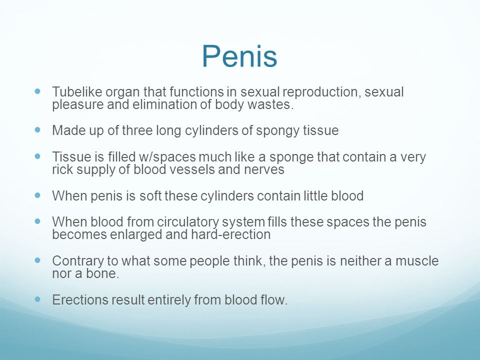 Penis Tubelike organ that functions in sexual reproduction, sexual pleasure and elimination of body wastes.