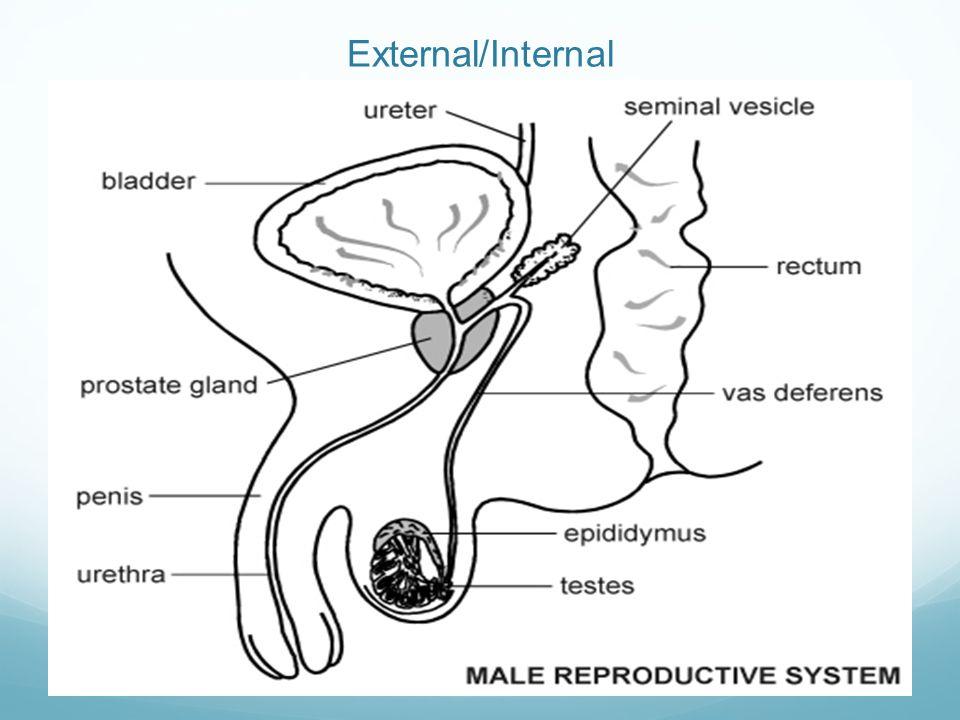 External/Internal