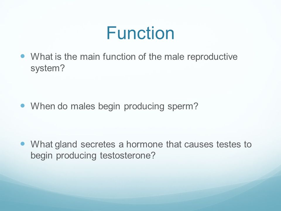 Function What is the main function of the male reproductive system