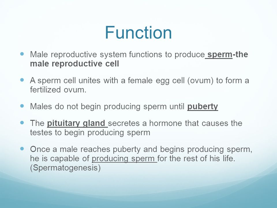 Function Male reproductive system functions to produce sperm-the male reproductive cell.