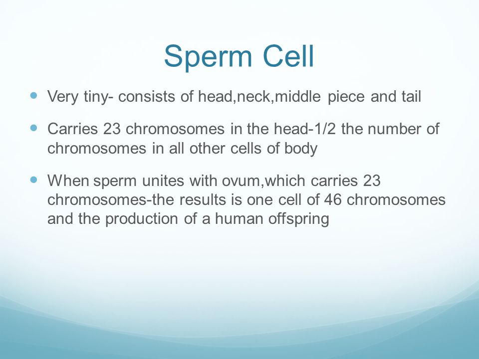 Sperm Cell Very tiny- consists of head,neck,middle piece and tail
