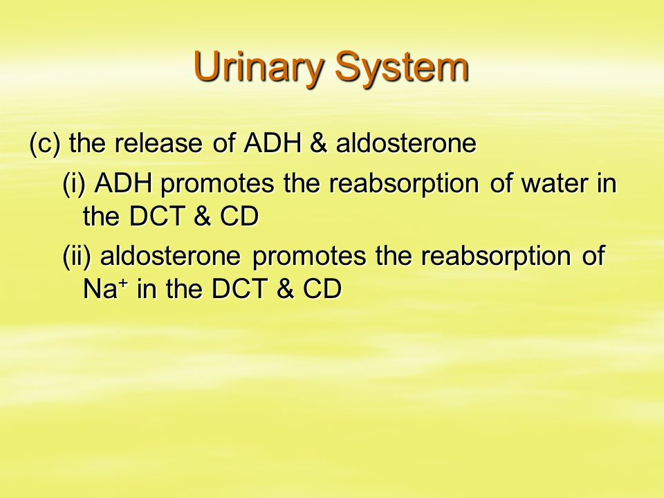 Urinary System (c) the release of ADH & aldosterone