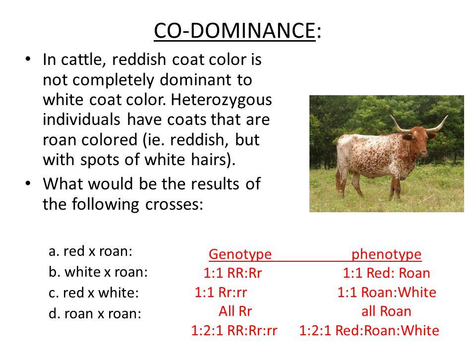 1:2:1 RR:Rr:rr 1:2:1 Red:Roan:White